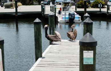 A Boater's Guide to Waterline Marina Resort